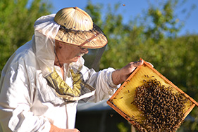 Join Whangarei Bee Club